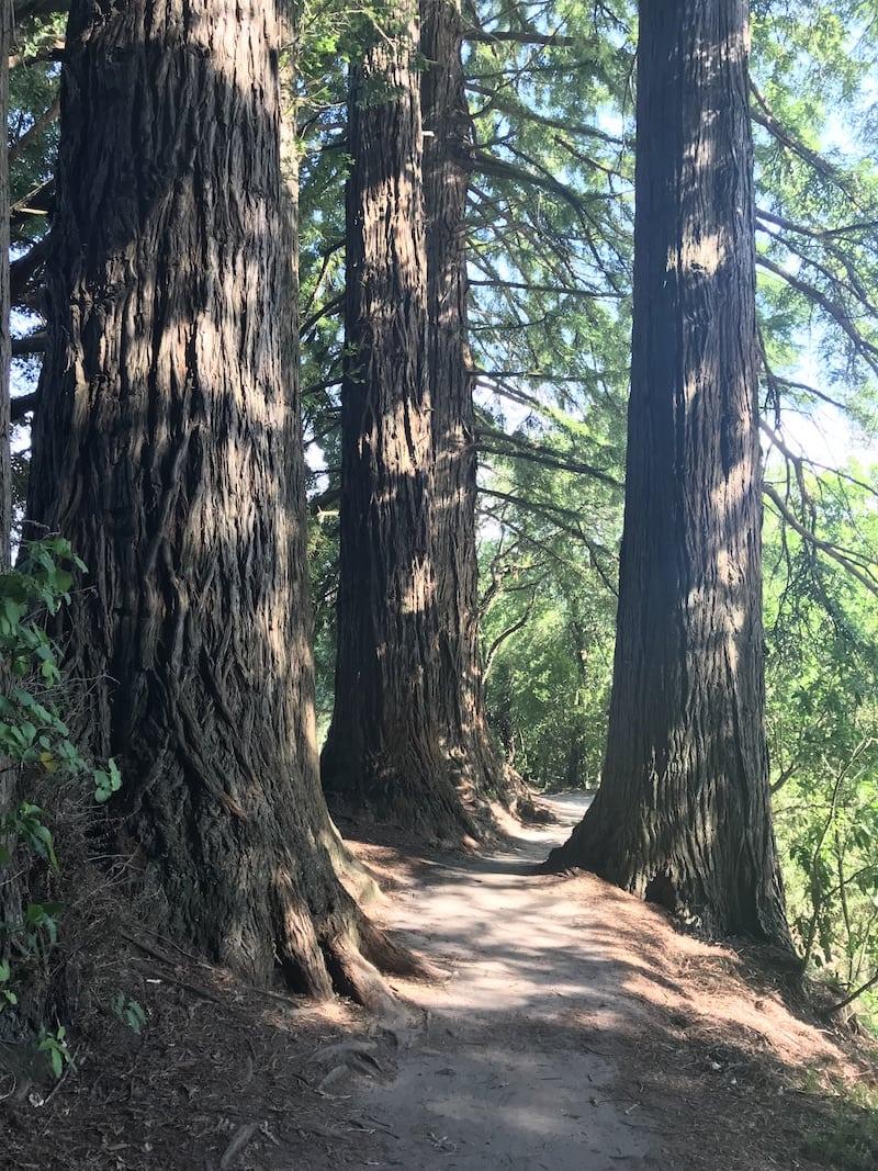 A walk through the California Oaks