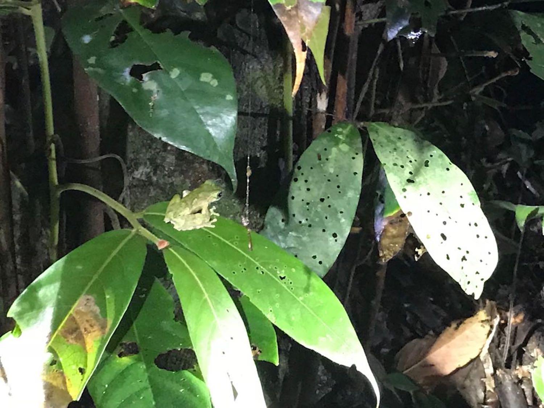 Cute frog, lol