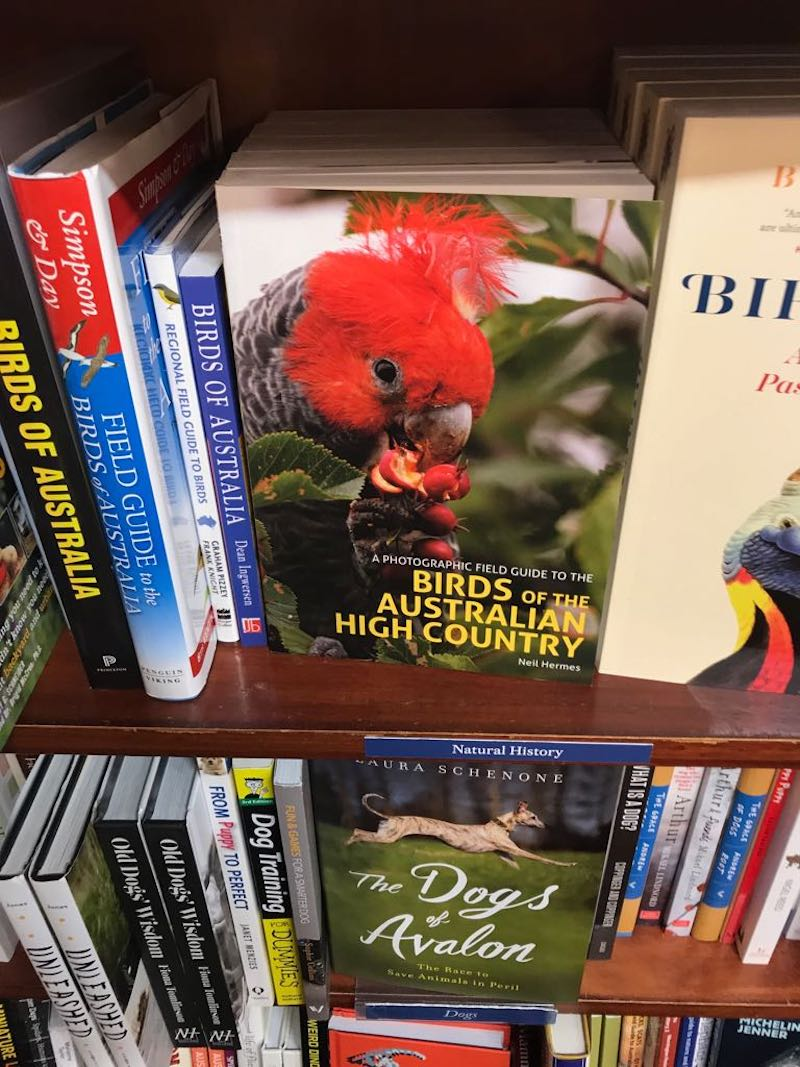 I love good bookstores and birds lol