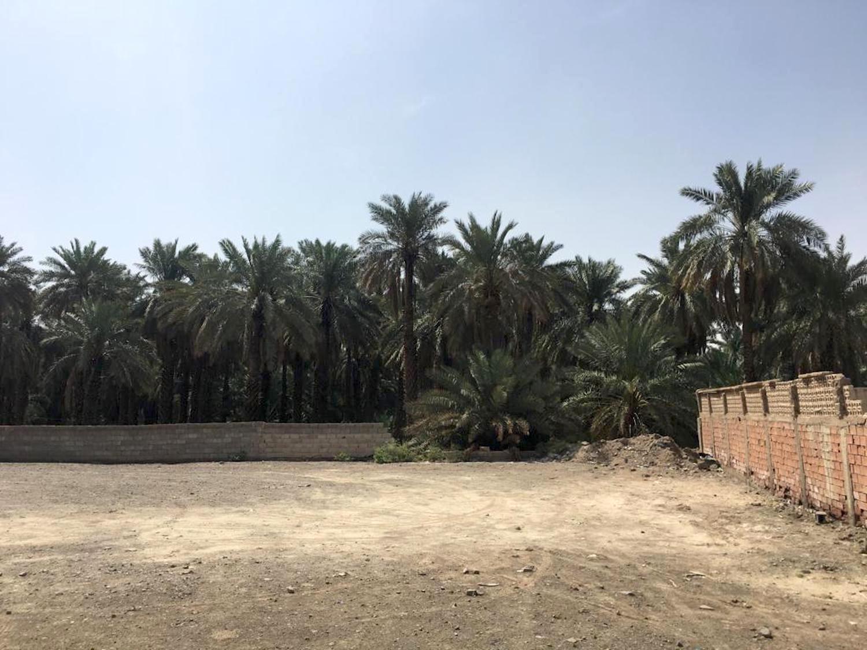 Al-Alia one of the best date farms in Al-Madina
